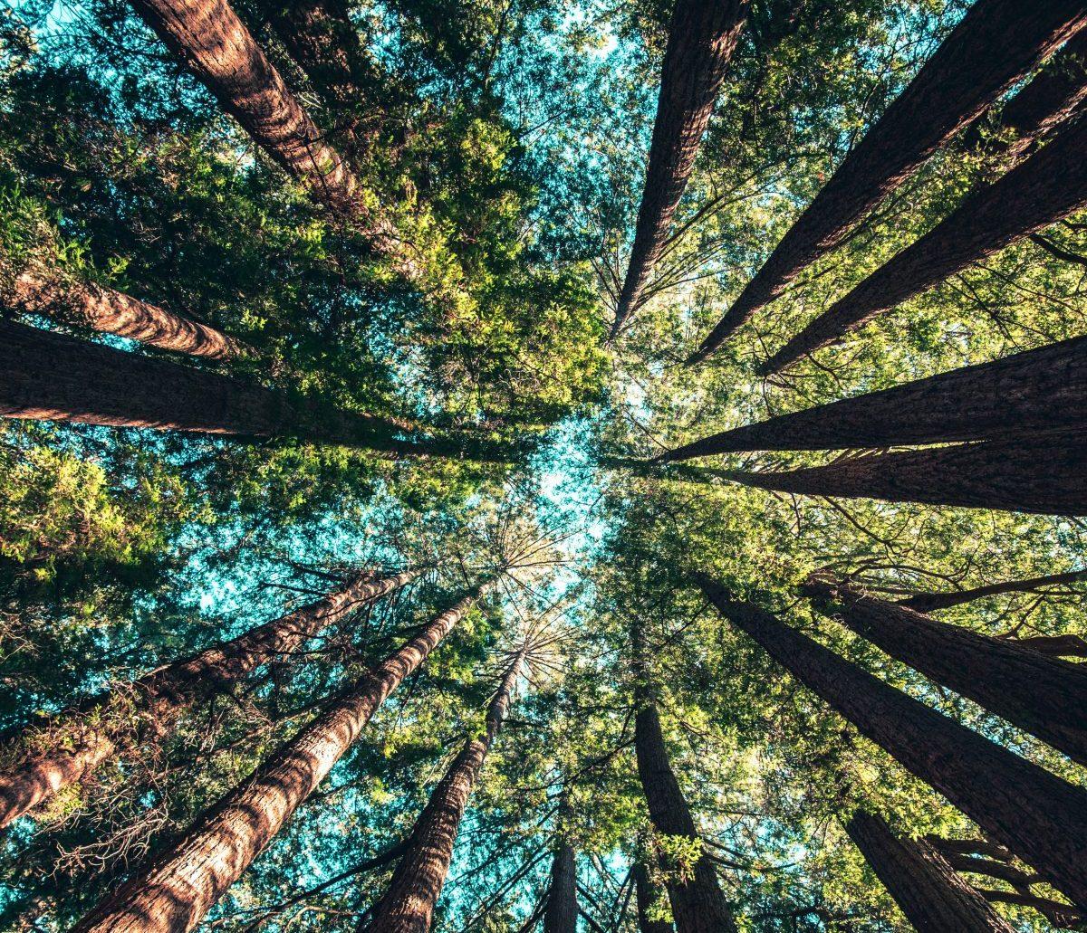 Engagement forêts Devillard